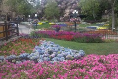 MVW: Epcot's Flower and Garden Festival