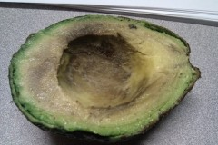 Produce-Avocado-1