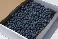 blueberries_5box